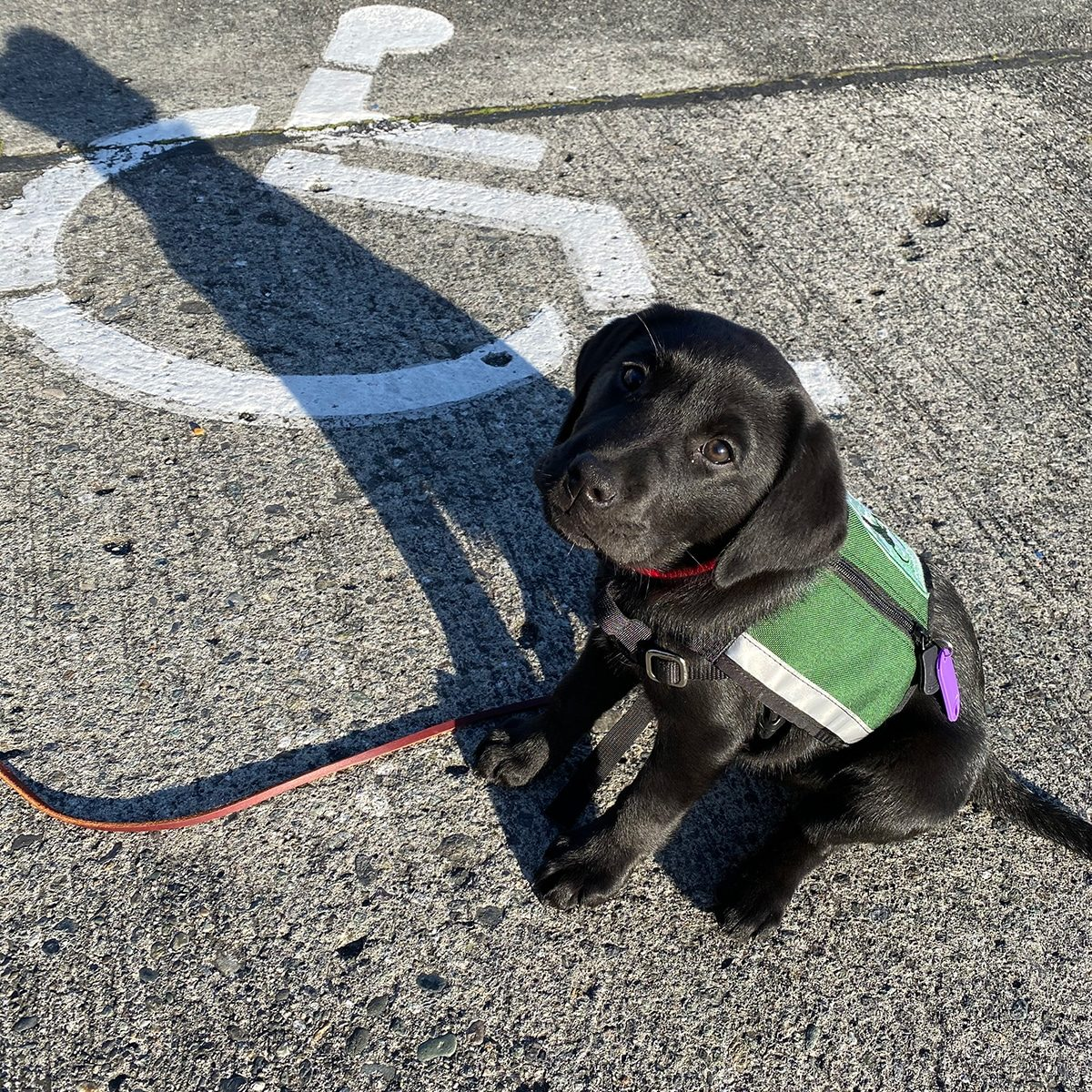 Gracie Future Mobility Assistance Dog